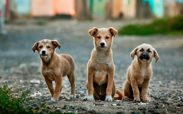 Egészséges kutyatápok
